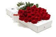 Цветы из Эквадора, купить розу недорого